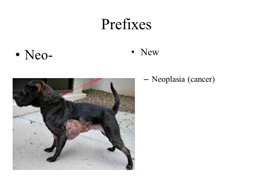 Prefixes Neo- New Neoplasia (cancer)