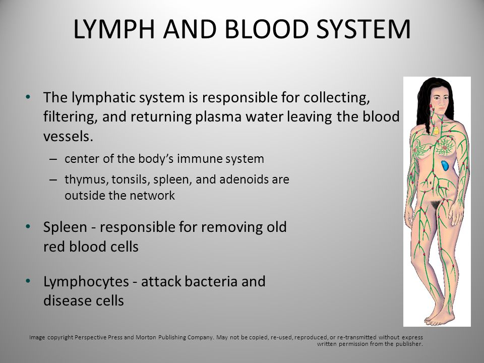 LYMPH AND BLOOD SYSTEM The lymphatic system is responsible for collecting, filtering, and returning plasma water leaving the blood vessels.