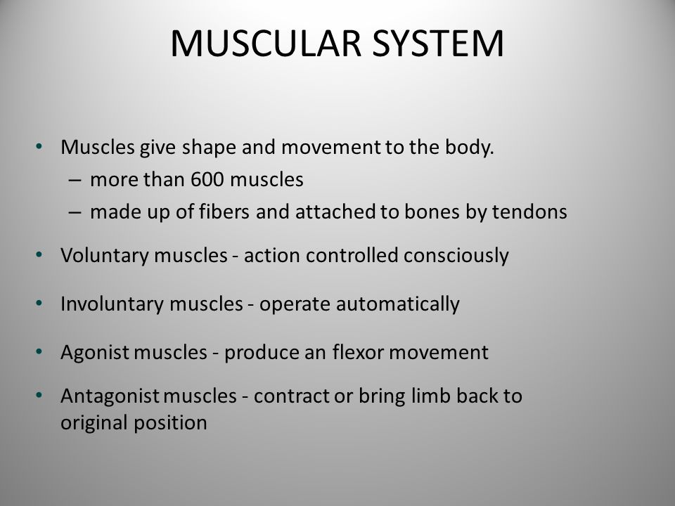 MUSCULAR SYSTEM Muscles give shape and movement to the body.
