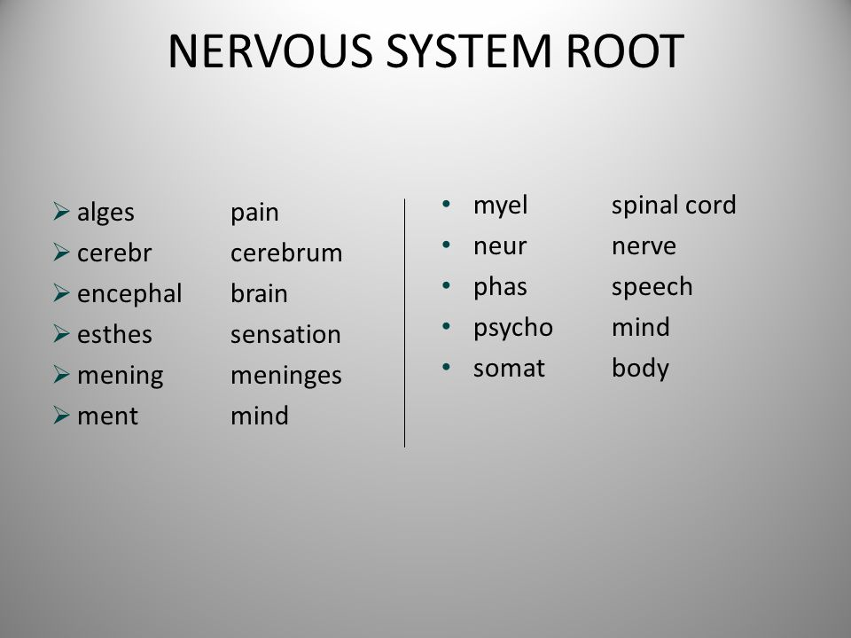 NERVOUS SYSTEM ROOT myel spinal cord alges pain neur nerve