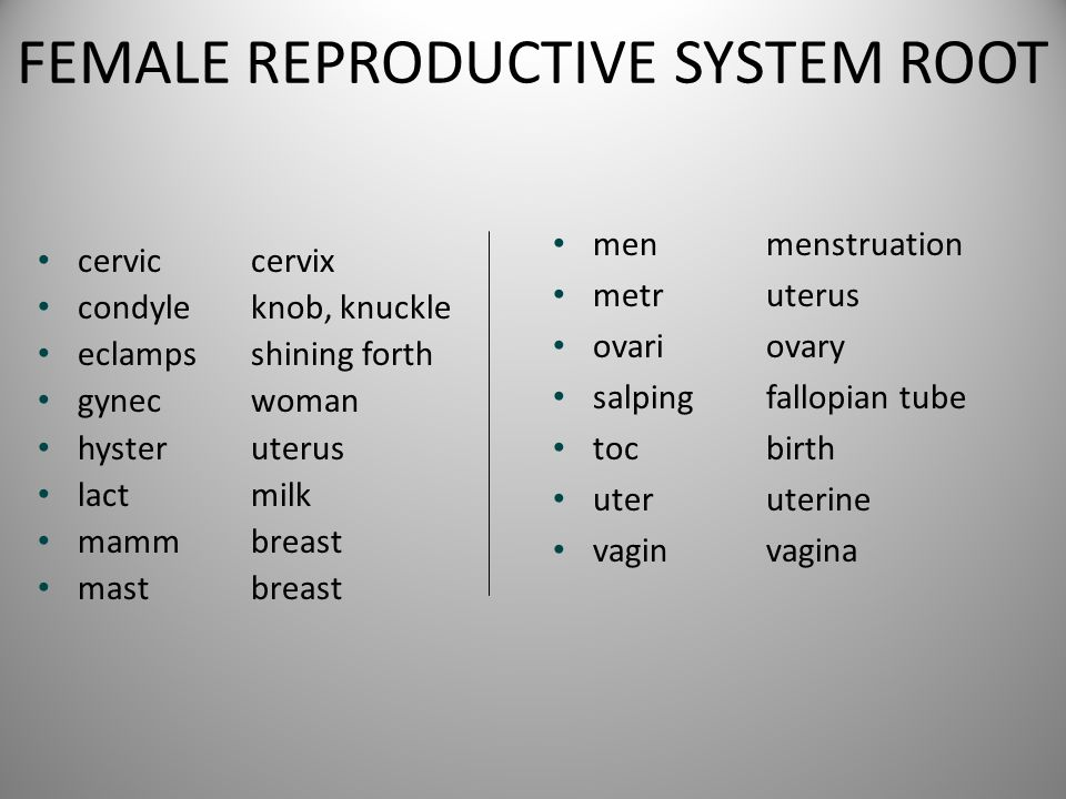 FEMALE REPRODUCTIVE SYSTEM ROOT