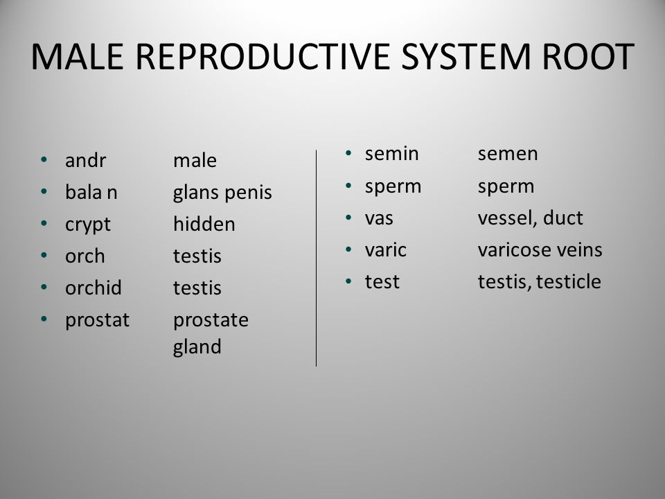 MALE REPRODUCTIVE SYSTEM ROOT