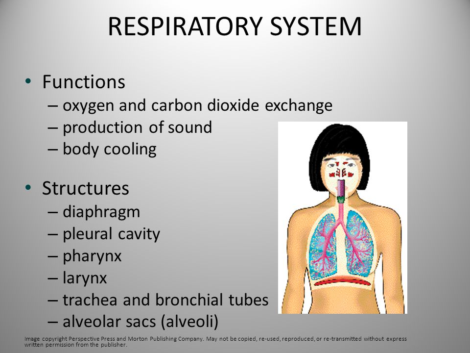 RESPIRATORY SYSTEM Functions Structures