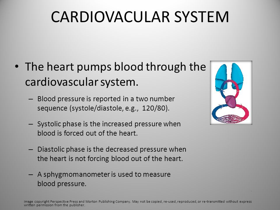 CARDIOVACULAR SYSTEM The heart pumps blood through the cardiovascular system.