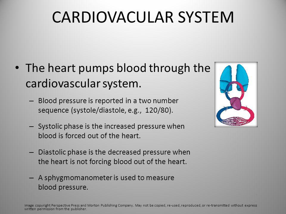 CARDIOVACULAR SYSTEM The heart pumps blood through the cardiovascular system.