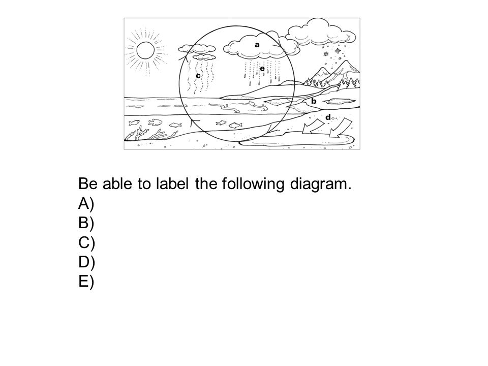 Be able to label the following diagram. A) B) C) D) E)