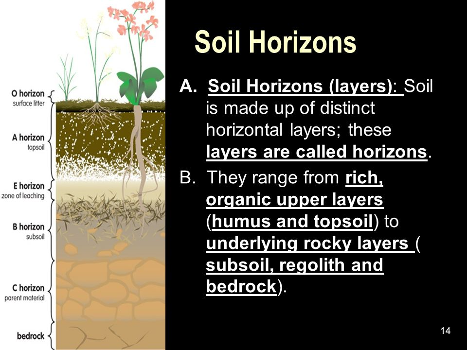 Soil Horizons A. Soil Horizons (layers): Soil is made up of distinct horizontal layers; these layers are called horizons.