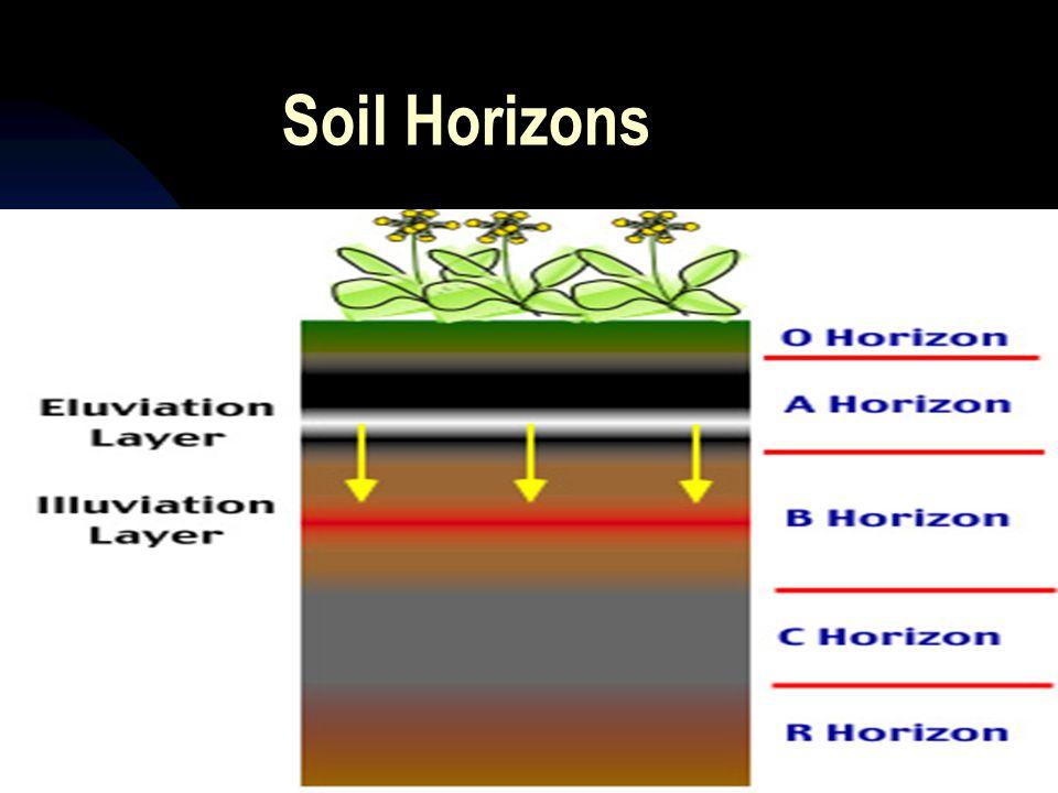 Soil Horizons 4/12/2017