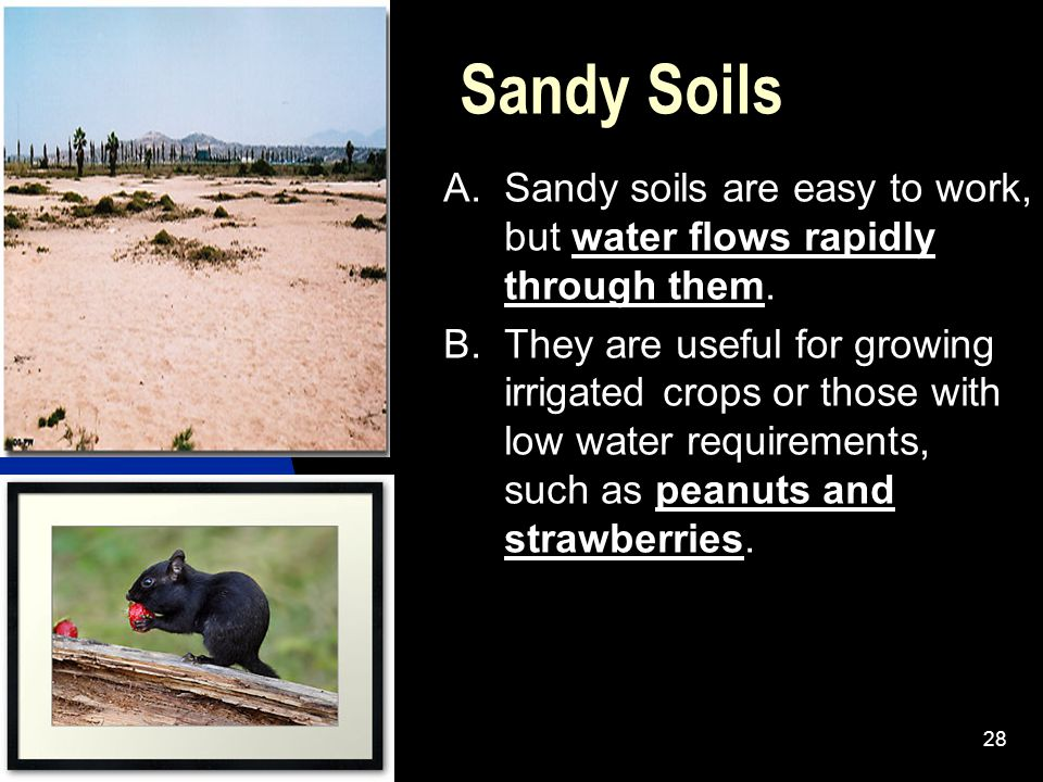 Sandy Soils A. Sandy soils are easy to work, but water flows rapidly through them.