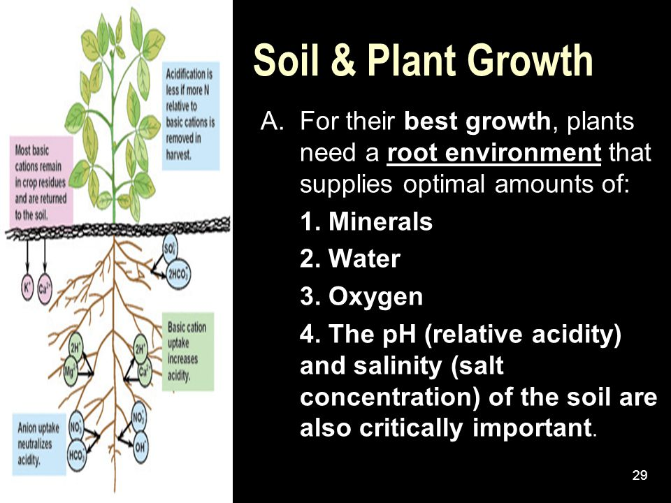 Soil & Plant Growth A. For their best growth, plants need a root environment that supplies optimal amounts of: