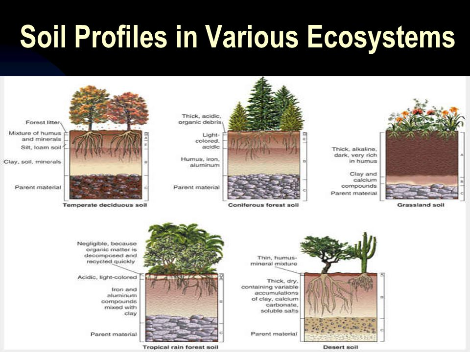 Soil Profiles in Various Ecosystems