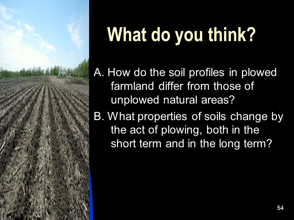 What do you think A. How do the soil profiles in plowed farmland differ from those of unplowed natural areas