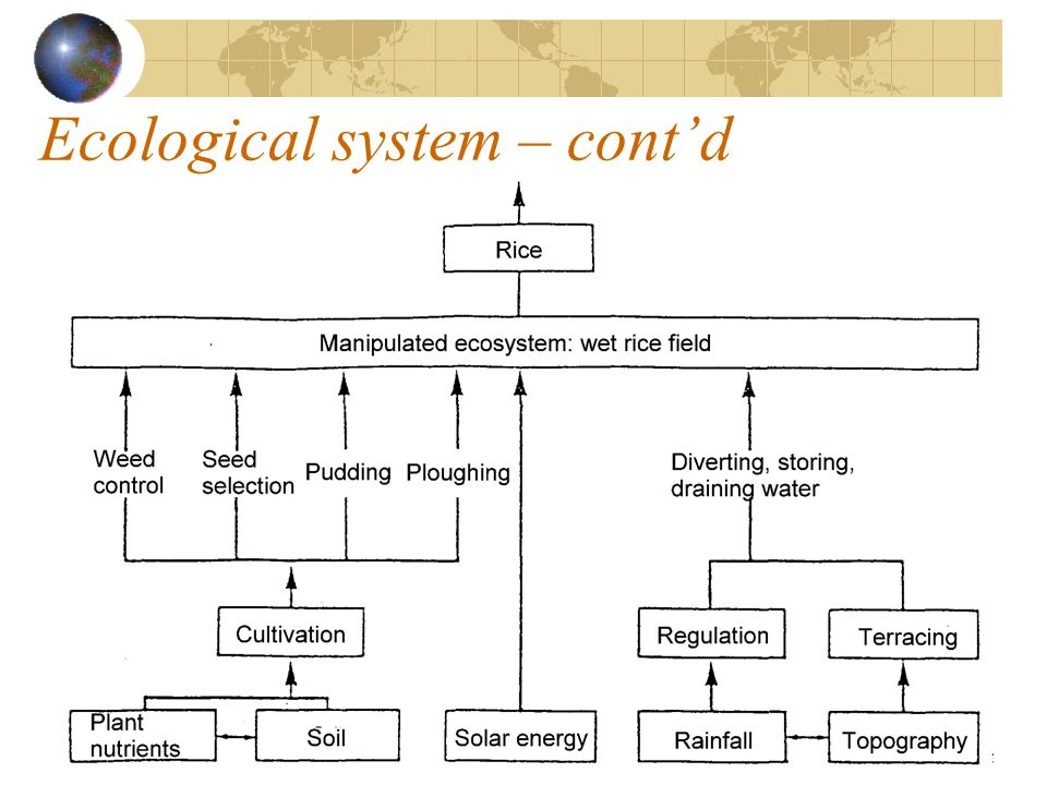 Ecological system – cont'd
