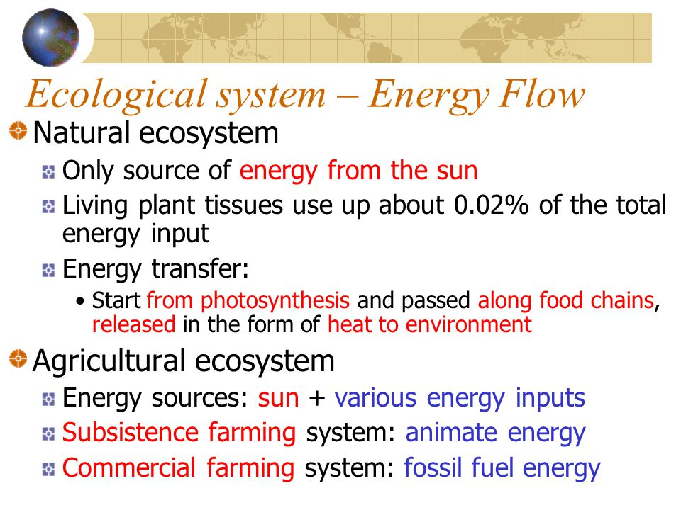 Ecological system – Energy Flow