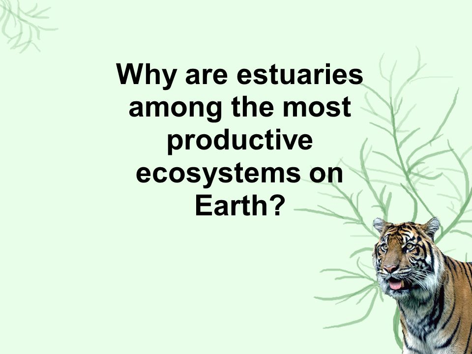 Why are estuaries among the most productive ecosystems on Earth