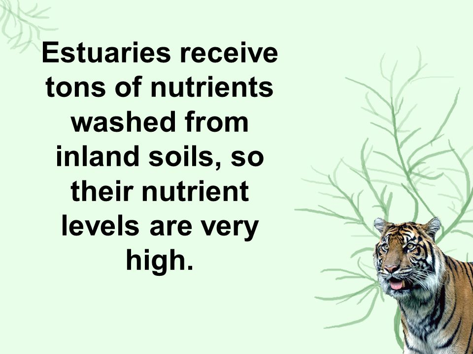 Estuaries receive tons of nutrients washed from inland soils, so their nutrient levels are very high.