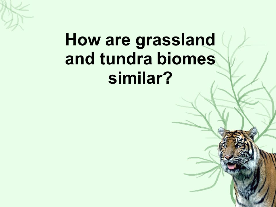 How are grassland and tundra biomes similar