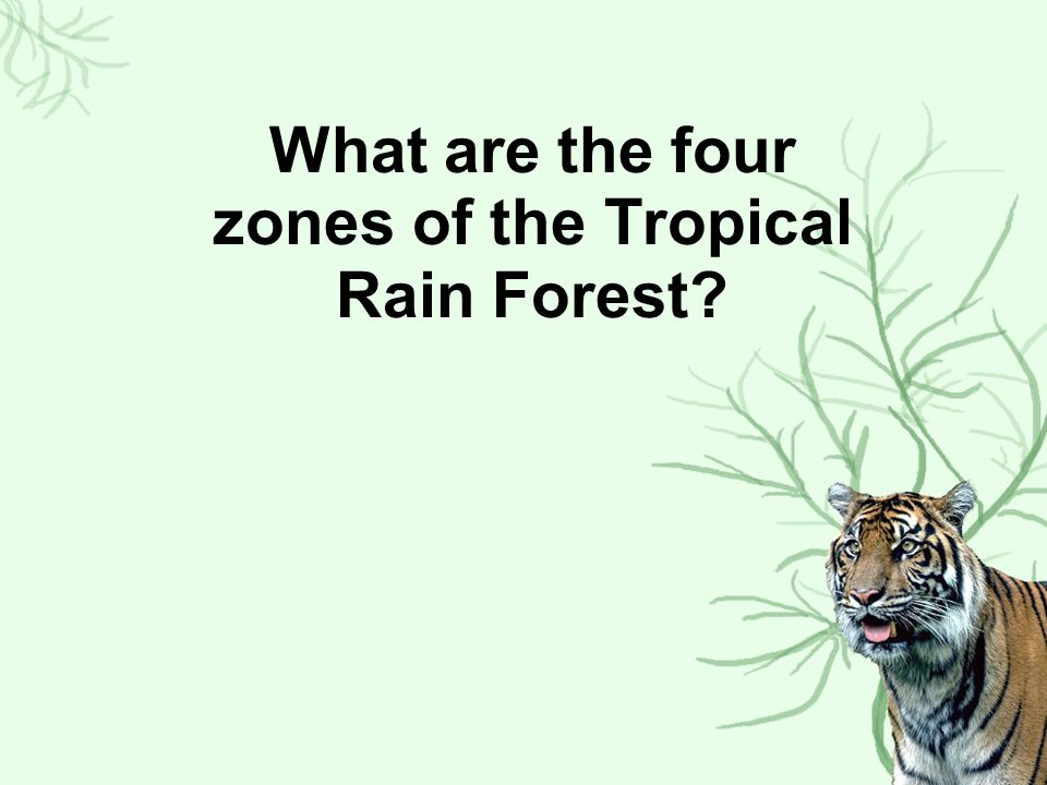 What are the four zones of the Tropical Rain Forest
