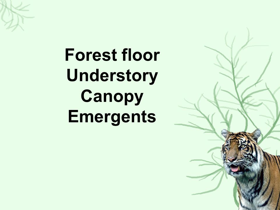 Forest floor Understory Canopy Emergents