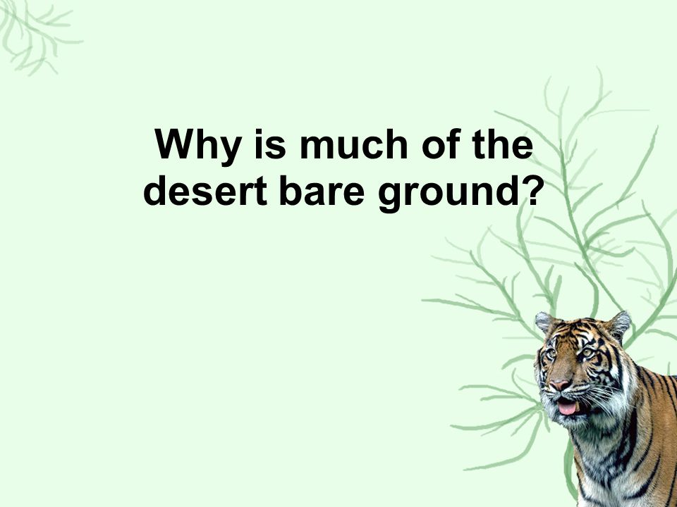 Why is much of the desert bare ground