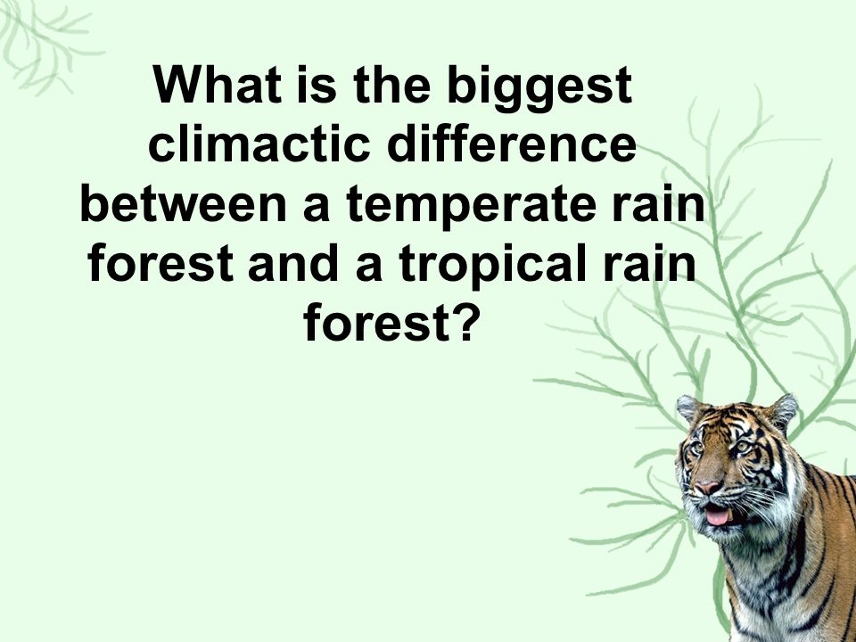 What is the biggest climactic difference between a temperate rain forest and a tropical rain forest