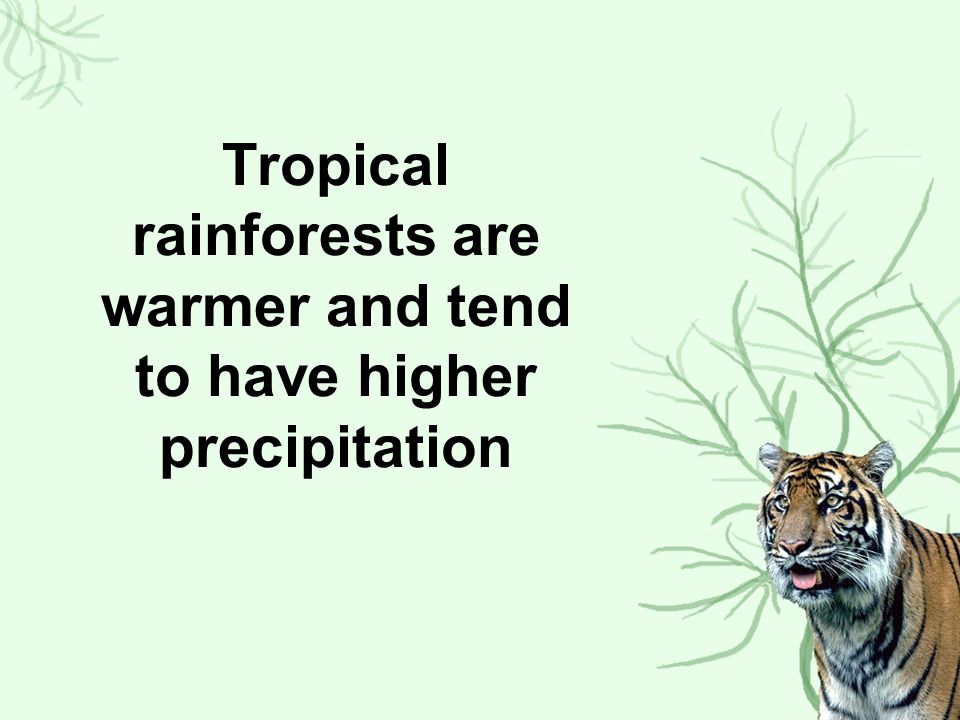 Tropical rainforests are warmer and tend to have higher precipitation