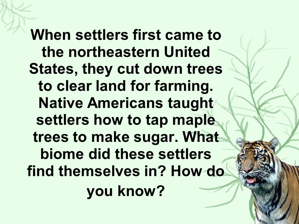 When settlers first came to the northeastern United States, they cut down trees to clear land for farming.