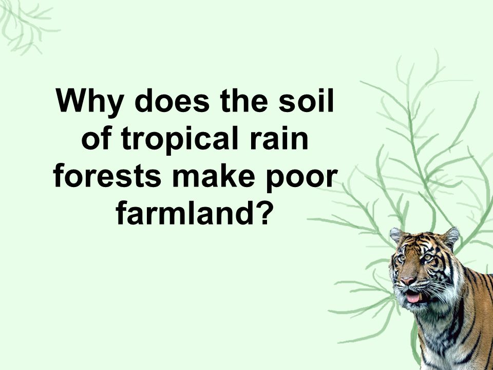 Why does the soil of tropical rain forests make poor farmland