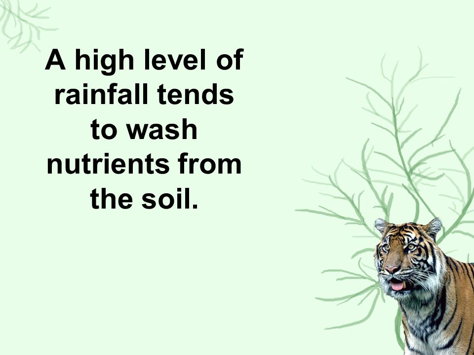 A high level of rainfall tends to wash nutrients from the soil.