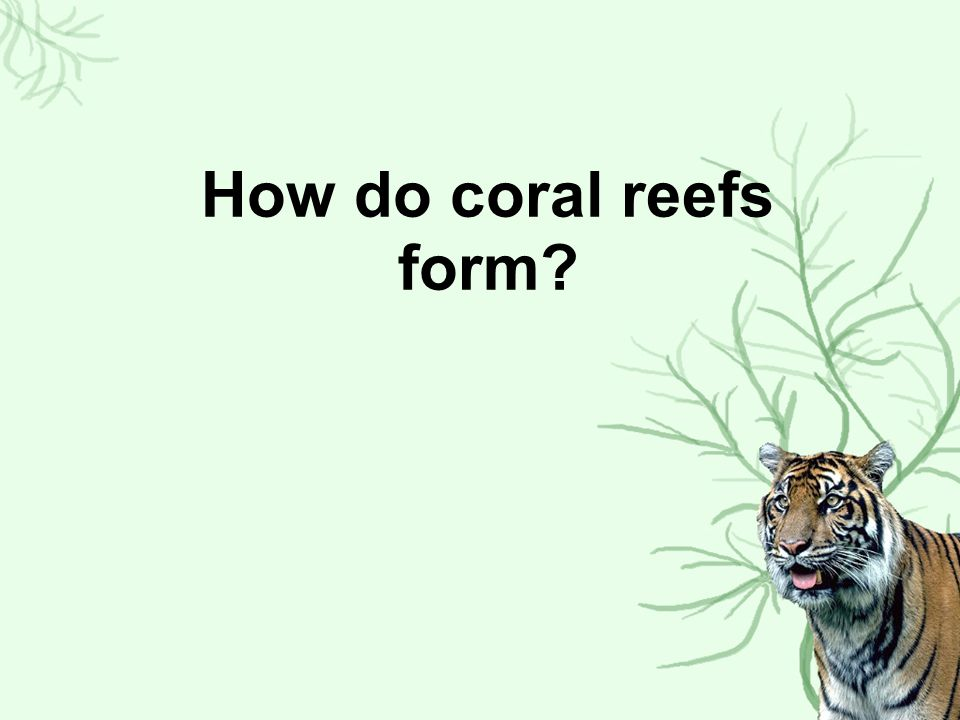 How do coral reefs form