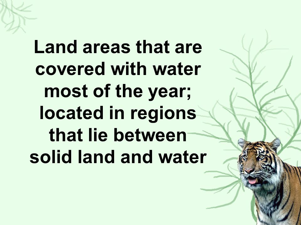 Land areas that are covered with water most of the year; located in regions that lie between solid land and water