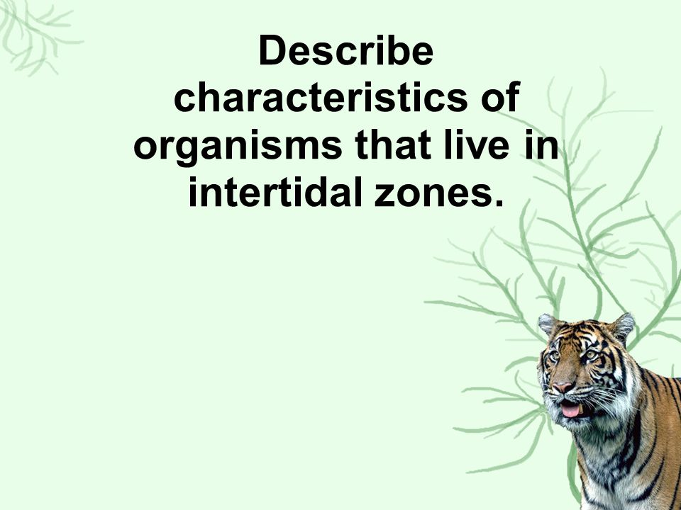 Describe characteristics of organisms that live in intertidal zones.