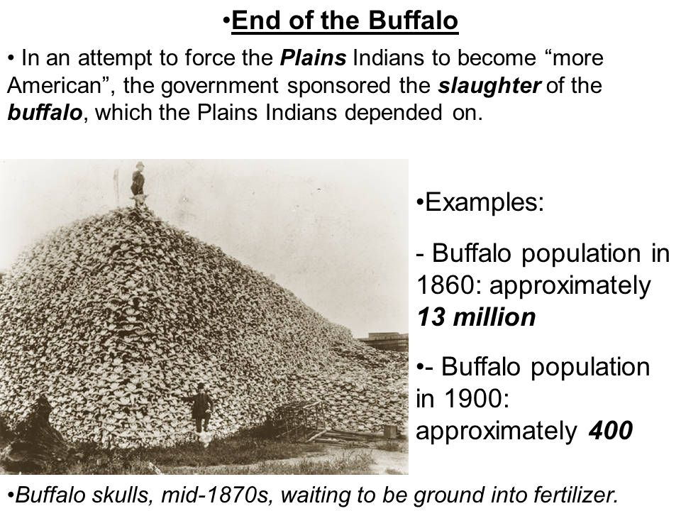 Buffalo population in 1860: approximately 13 million