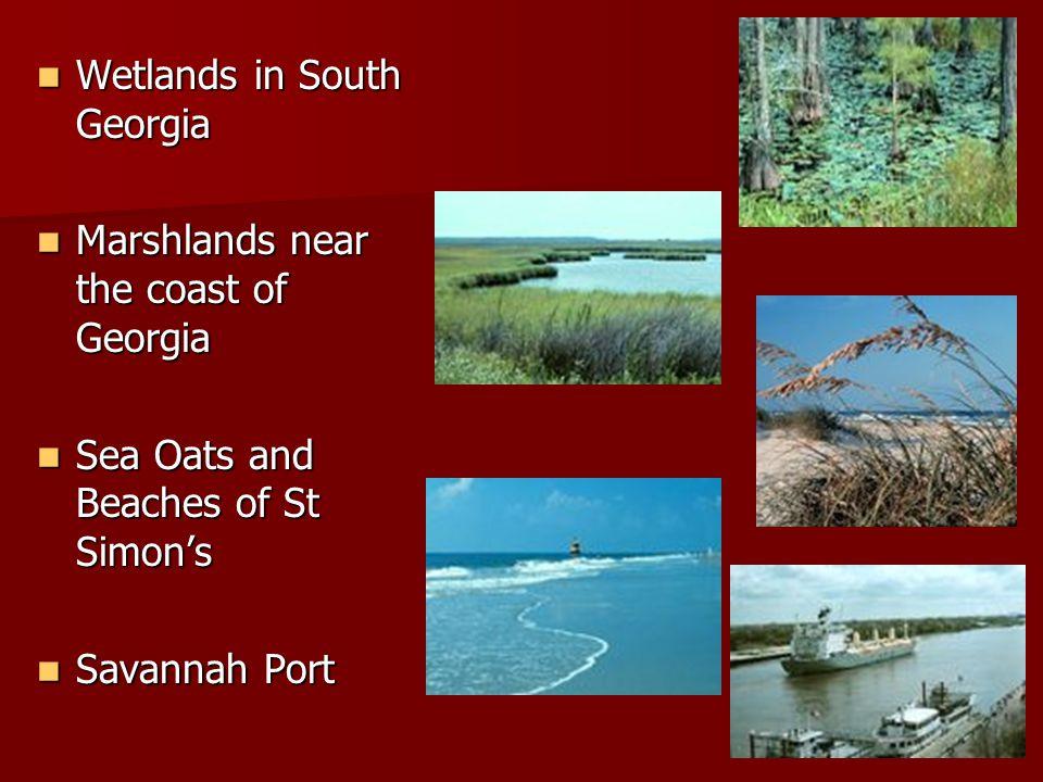 Wetlands in South Georgia