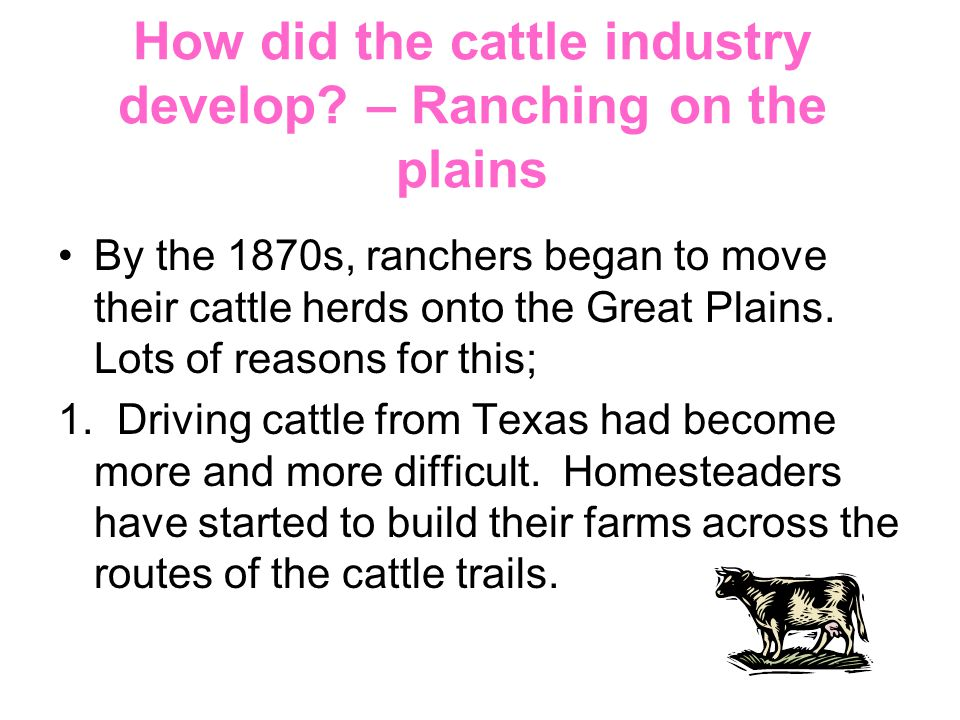 How did the cattle industry develop – Ranching on the plains