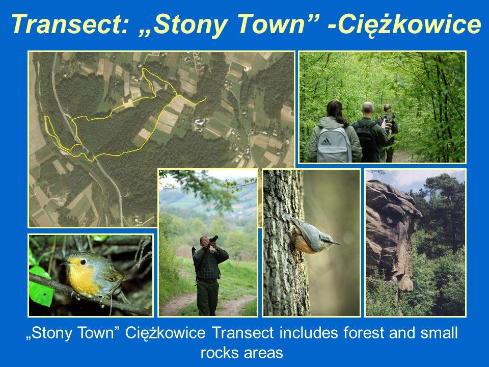 "Transect: ""Stony Town -Ciężkowice"