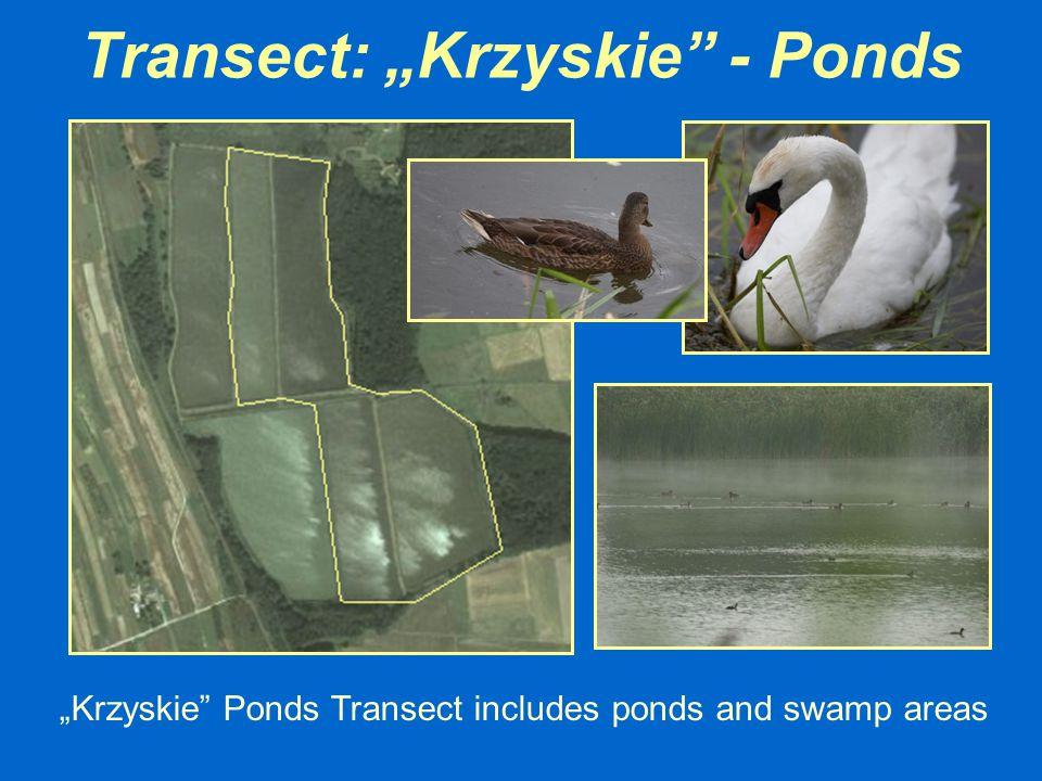 "Transect: ""Krzyskie - Ponds"
