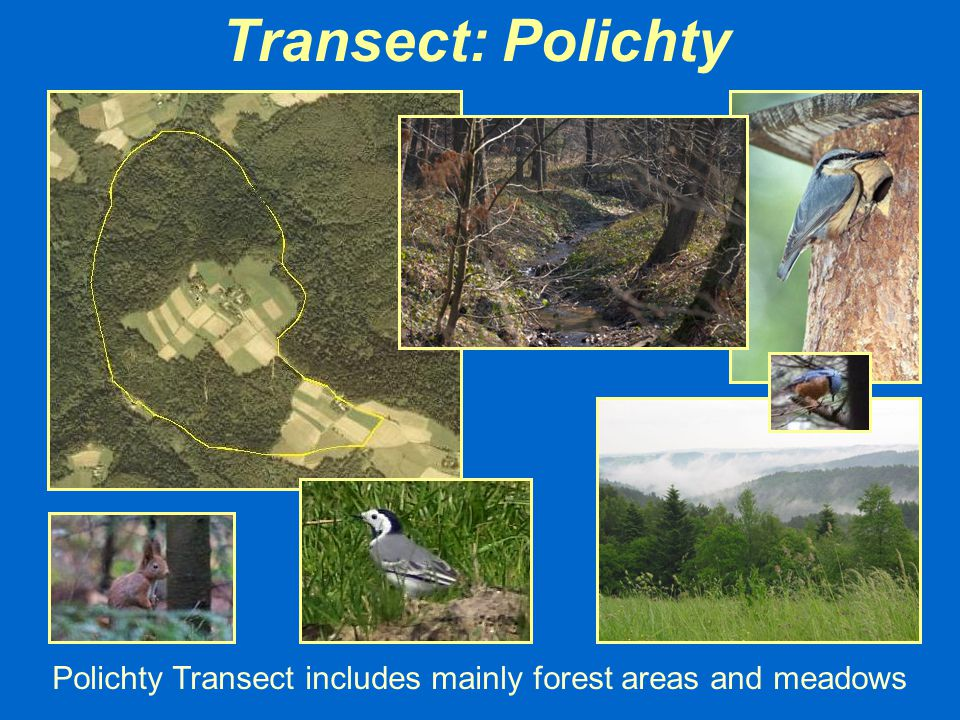 Polichty Transect includes mainly forest areas and meadows