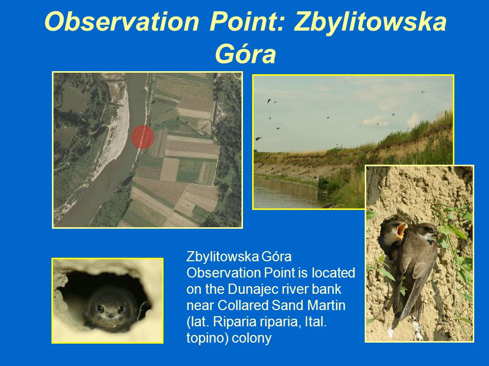 Observation Point: Zbylitowska Góra