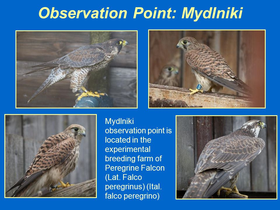 Observation Point: Mydlniki