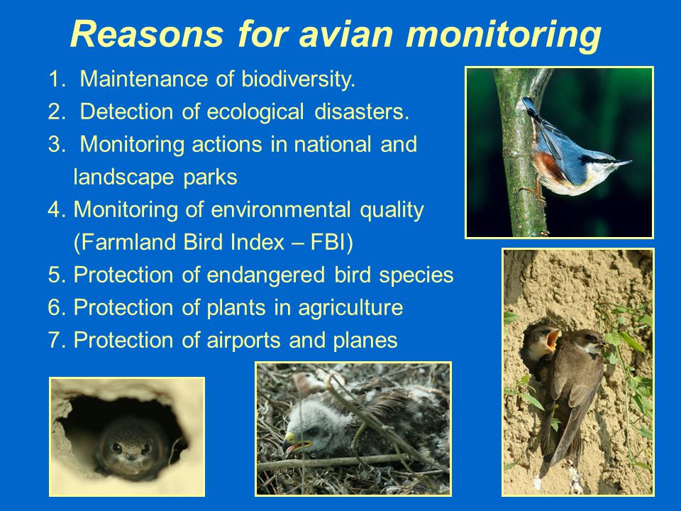 Reasons for avian monitoring