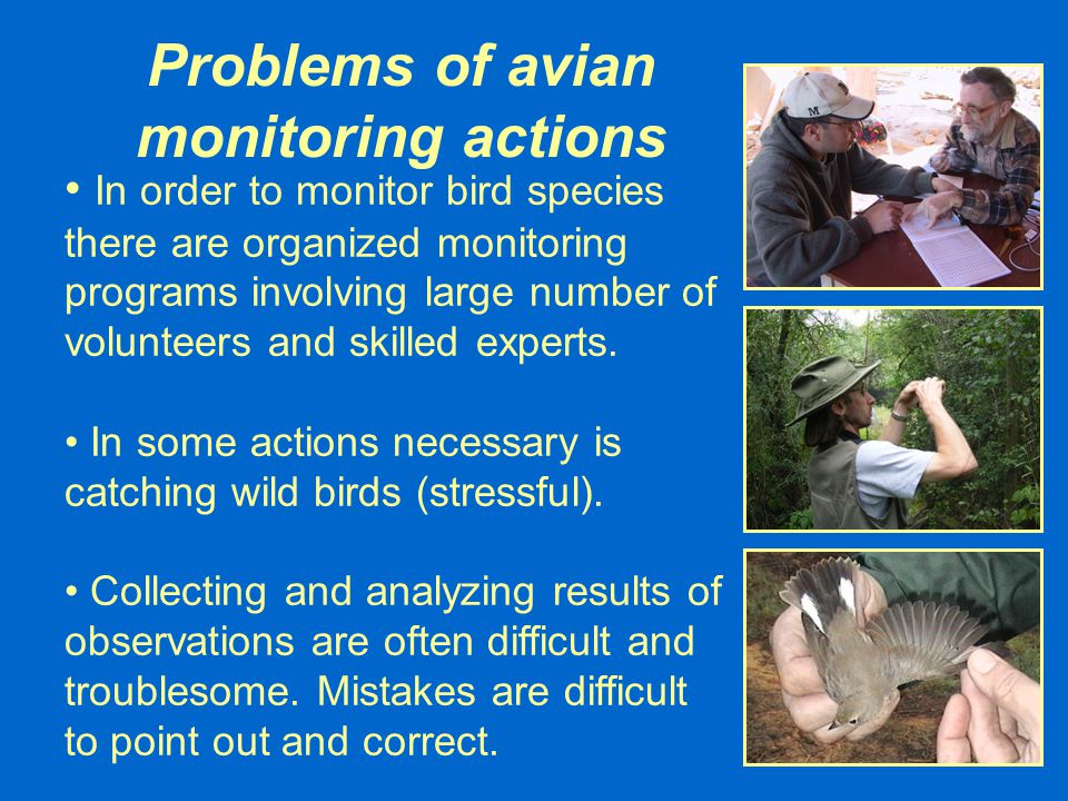 Problems of avian monitoring actions