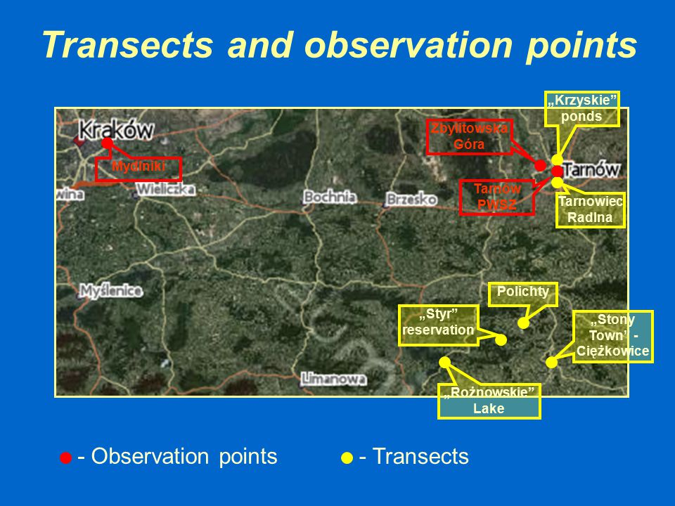 Transects and observation points