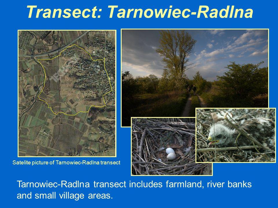 Transect: Tarnowiec-Radlna