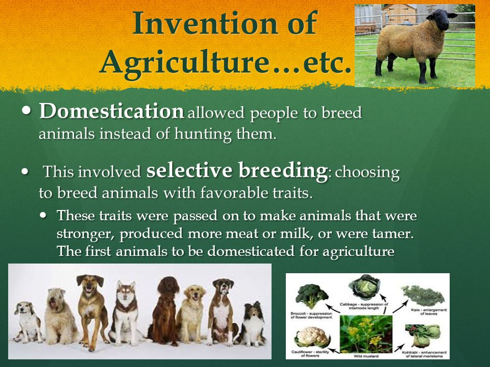 Invention of Agriculture…etc.