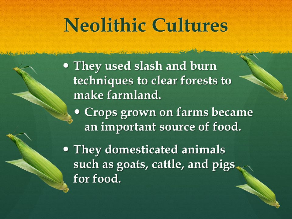 Neolithic Cultures They used slash and burn techniques to clear forests to make farmland.