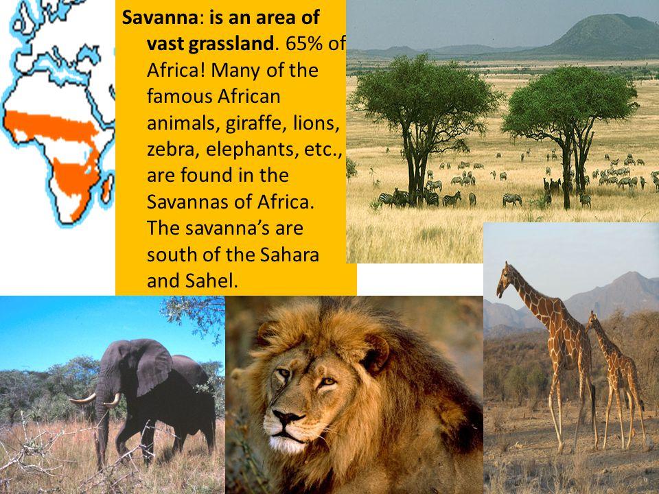 Savanna: is an area of vast grassland. 65% of Africa