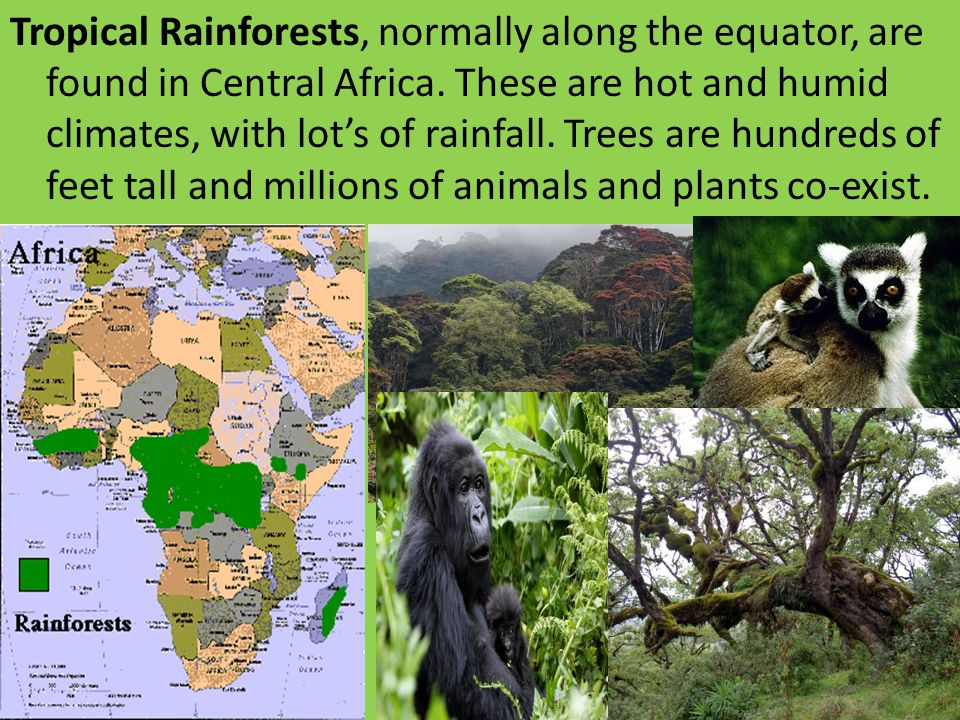 Tropical Rainforests, normally along the equator, are found in Central Africa.