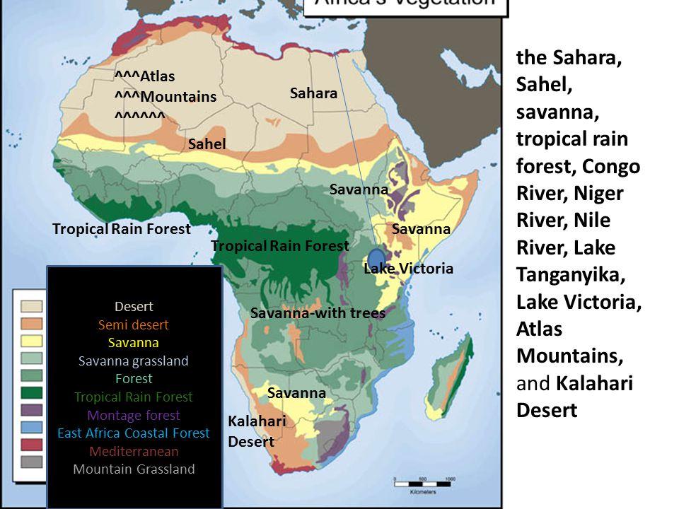 East Africa Coastal Forest