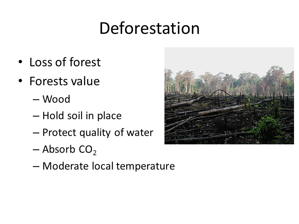 Deforestation Loss of forest Forests value Wood Hold soil in place